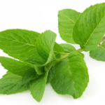 "Medicinal use of ""Mint herbal plant"" for ""Ulcer and stomach problems """