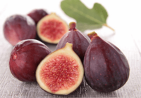 fig-herbalogy