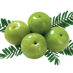 Medicinal use of Amla