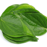 Medicinal uses of Betel for Common cold, Cough, Inflammation of the Vocal Cords, Bronchitis and Bronchial Asthma