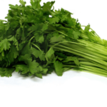 Medicinal use of Celery, Chestnut, Chicory, Cleavers