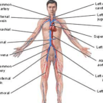 "Human Body Systems ""Nervous system"", ""Respiratory system"", ""Excretory System"" and their Functioning"